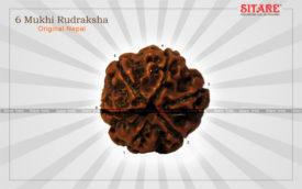 6 Mukhi Rudraksha Original Nepal