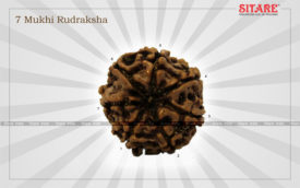 7 Mukhi Rudraksha