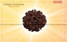 8 Mukhi Rudraksha Original Nepal