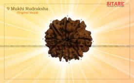 9 Mukhi Rudraksha Original Nepal