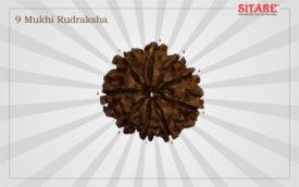 9 Mukhi Rudraksha