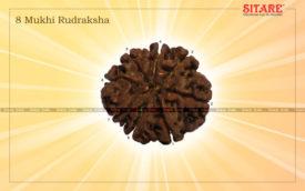 8 Mukhi Rudraksha1
